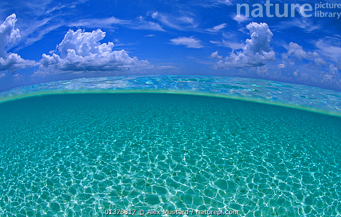 A split level view of shallow water and clouds in summer, Seven Mile Beach, Grand Cayman, Cayman Islands, British West Indies. Caribbean Sea., ATLANTIC,BACKGROUNDS,BLUE,british West Indies,CALM,CARIBBEAN,caribbean sea,catalogue4,cayman islands,CLOUDS,EMPTY,grand cayman,horizon,horizon over water,idyllic,ISLANDS,LANDSCAPES,MARINE,natural pattern,nature,Nobody,PATTERNS,PEACEFUL,refraction,sea,seabed,Seven Mile Beach,Shallow,SKY,split level,SPLIT LEVEL,SUMMER,TROPICAL,TURQUOISE,view to sea,WATER,water level,WEST INDIES,Weather,,Immense,Vast,Space,Open Spaces,, Alex Mustard