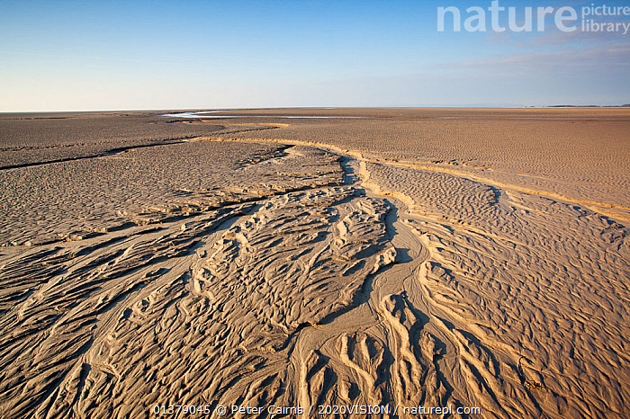 Patterns in mudflats, Morecambe Bay, Cumbria, England, UK, February. 2020VISION Book Plate.  ,  2020vision book plate,COASTS,EUROPE,mudflats,SALTMARSHES,2020VISION,ENGLAND,LANDSCAPES,PATTERNS,UK,United Kingdom  ,  Peter Cairns / 2020VISION