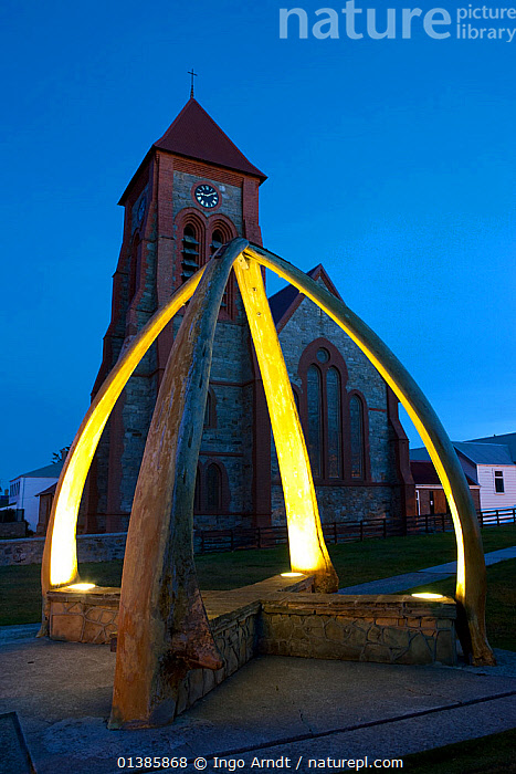Port Stanley Christ Church Cathedral with Whale Bone Arch, erected in 1933 to celebrate a century of British rule, Falkland Islands, February 2011  ,  ATLANTIC,BUILDINGS,FALKLAND ISLANDS,MEMORIAL,MONUMENT,SOUTH ATLANTIC ISLANDS,SUBANTARCTIC ISLANDS,URBAN,VERTICAL,WHALING,Marine  ,  Ingo Arndt