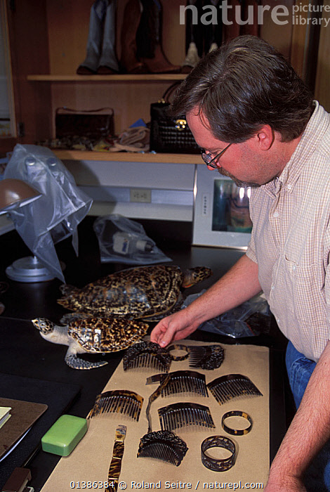 Barry Baker, herpatologist, analysing turtleshell artefacts and samples of turtle shell at the National Fish and Wildlife Forensics Laboratory, Ashland, Oregon, USA  ,  ILLEGAL,INDOORS,MAN,PEOPLE,POLICE,REPTILES,SHELLS,TURLTES,USA,VERTICAL,WILDLIFE TRADE,WORKING,North America  ,  Roland Seitre