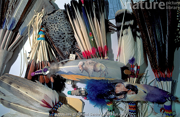 Indian artefact feather products for examination at the National Fish and Wildlife Forensics Laboratory, Ashland, Oregon, USA  ,  ARTEFACTS,BIRDS,FEATHERS,POLICE,USA,WILDLIFE TRADE,North America  ,  Roland Seitre
