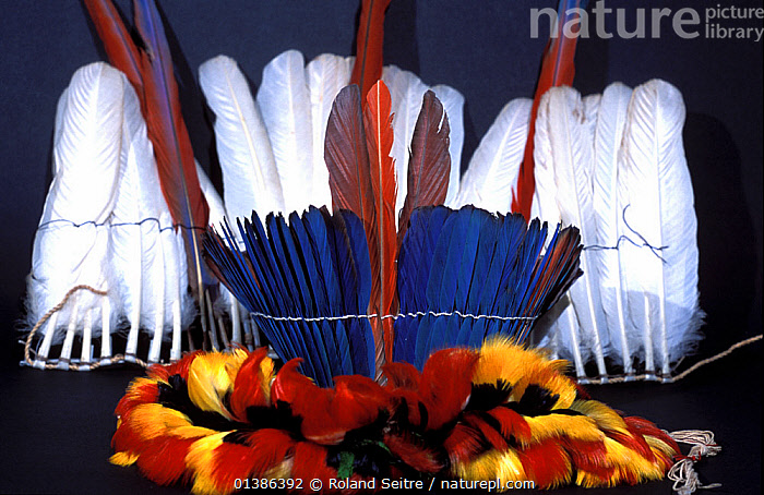 Tropical feather products for examination at the National Fish and Wildlife Forensics Laboratory, Ashland, Oregon, USA  ,  BIRDS,BLUE,COLOURFUL,FEATHERS,ILLEGAL,POLICE,TROPICAL,USA,WHITE,WILDLIFE TRADE,North America  ,  Roland Seitre