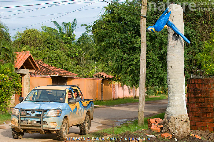 Conservation officers drive past model of Blue throated / Wagler's macaw (Ara glaucogularis) Trinidad, Beni, Bolivia, Critically endangered species, January 2008.  ,  BIRDS,BLUE,BUILDINGS,CANIDE MACAW,CAR,CARS,CRITICALLY ENDANGERED,ENDANGERED,MACAWS,MODELS,PARROTS,PSITTACIDAE,ROADS,VEHICLES,VERTEBRATES,VILLAGES,WAGLER'S MACAW  ,  Roland Seitre