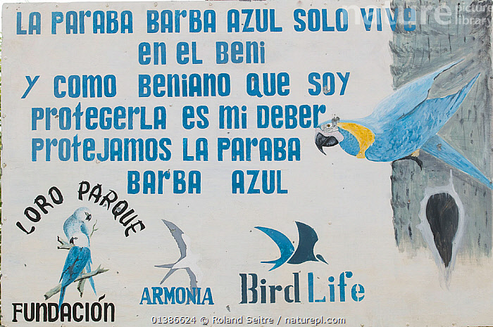 Sign of the conservation programme for the Blue throated / Wagler's macaw (Ara glaucogularis) Trinidad, Beni, Bolivia, Critically endangered species, January 2008.  ,  BIRDS,CANIDE MACAW,CONSERVATION,CRITICALLY ENDANGERED,EDUCATION,ENDANGERED,MACAWS,PARROTS,PSITTACIDAE,SIGNS,VERTEBRATES,WAGLER'S MACAW  ,  Roland Seitre