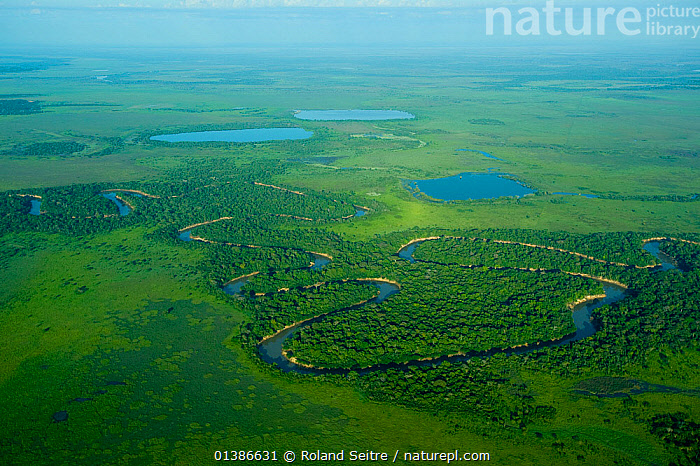 Aerial view of river and fringing forest in the municipality of Trinidad, Beni state, Bolivia, June 2008  ,  AERIALS,GREEN,LANDSCAPES,PLAINS,RIVERS,SOUTH AMERICA,WATER,WETLANDS  ,  Roland Seitre