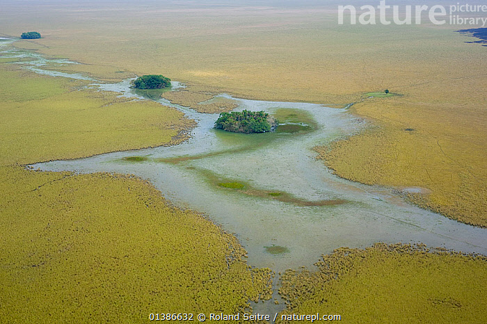 Aerial view of a forest islet in the Llanos de Moxos, a natural roosting site for the Critically endangered Blue throated macaw (Ara glaucogularis), Estancia Tacuaral, Santa Ana del Yacuma, Beni, Bolivia, July 2008  ,  AERIALS,BIRDS,CANIDE MACAW,CRITICALLY ENDANGERED,ENDANGERED,LANDSCAPES,MACAWS,PARROTS,PSITTACIDAE,RIVERS,SOUTH AMERICA,VERTEBRATES,WAGLER'S MACAW,WETLANDS  ,  Roland Seitre