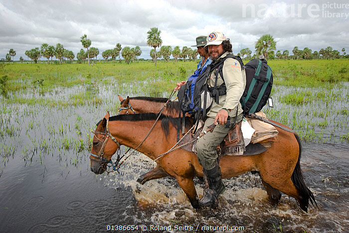 Conservation officer, Hernan Vargas Ayala, and his assistant riding through wetlands on survey of the Critically endangered, Blue throated macaw (Ara glaucogularis) Trinidad, Beni, Bolivia, January 2007  ,  CONSERVATION,ENDANGERED,HORSE,HORSES,MEN,PEOPLE,RESEARCH,RIDING,SOUTH AMERICA,TWO,WATER,WETLANDS  ,  Roland Seitre
