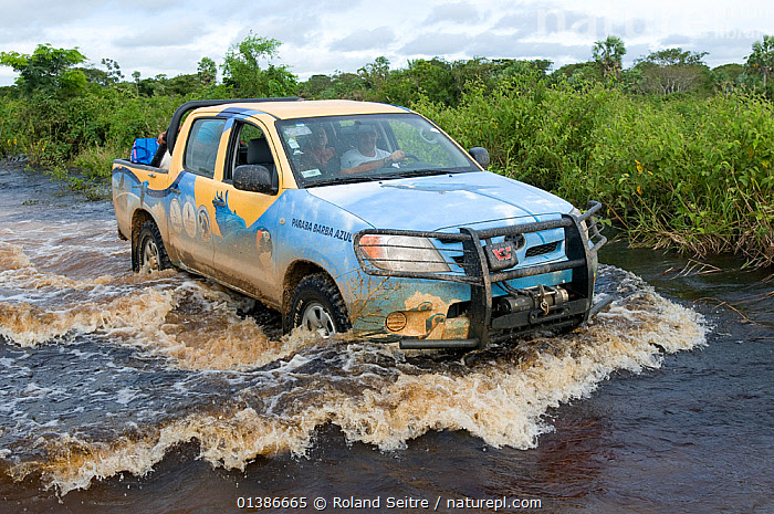 Vehicle crossing ford in flooded road on conservation survey of the Critically endangered Blue throated / Wagler's macaw (Ara glaucogularis) Trinidad, Beni, Bolivia, January 2008  ,  CAR,CARS,CONSERVATION,FLOODING,FLOODS,RESEARCH,RIVERS,ROADS,SOUTH AMERICA,VEHICLES,WATER,WAVES,WET SEASON  ,  Roland Seitre