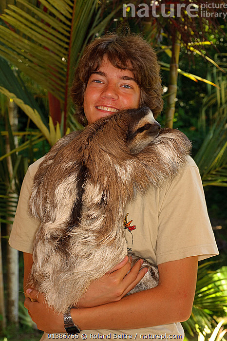 Conservation worker with tame Brown-throated Three Toed sloth (Bradypus variegatus).   Aviarios del Caribe Sloth Sanctuary, Costa Rica, 2008.  ,  BOY,CONSERVATION,COSTA RICA,DOMESTICATED,EDENTATES,INDOORS,MAMMALS,NP,PEOPLE,REHABILITATION,RESERVE,SLOTHS,SOUTH AMERICA,TAME,VERTEBRATES,VERTICAL,National Park  ,  Roland Seitre