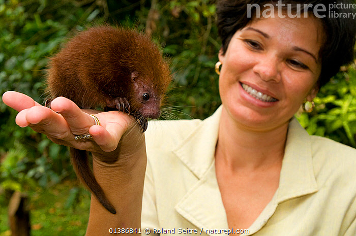 Baby Rothschild's Porcupine (Coendou rothschildi) on the palm of conservation volunteer. La Marinas Wildlife Rescue Centre, Costa Rica, 2008.  ,  BABIES,CONSERVATION,COSTA RICA,CUTE,MAMMALS,NP,OUTDOORS,PEOPLE,PORCUPINES,RESERVE,RODENTS,SMALL,SOUTH AMERICA,VERTEBRATES,YOUNG,National Park  ,  Roland Seitre