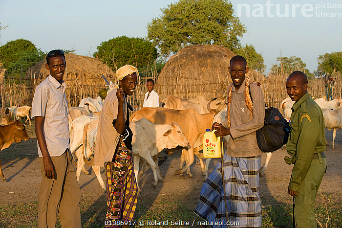 Herdsmen with their cattle, and a park ranger, in front of traditional dwellings. Ishaqbini Reserve, Kenya, 2009.  ,  AFRICA,BUILDINGS,CATTLE,EAST AFRICA,FOUR,GROUPS,HERS,HUTS,KENYA,NP,OUTDOORS,PEOPLE,RESERVE,SMILING,TRADITIONAL,National Park  ,  Roland Seitre