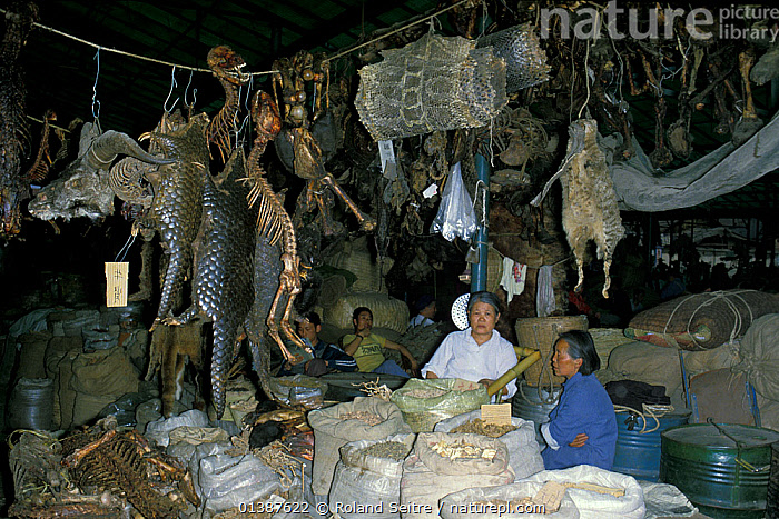 Chinese animal medicine market, including pangolin, snake skins, ungulate horns, and other unidentified dead animals. Cengdu, Sichuan, China, 1983.  ,  ASIA,CHINA,COMMERCE,HERBAL,MARKETS,MEDICINE,PEOPLE,REMEDIES,SECHUAN,SICHUAN,TRADE,TRADITIONAL,TRAFFIC,WILDLIFE TRADE  ,  Roland Seitre