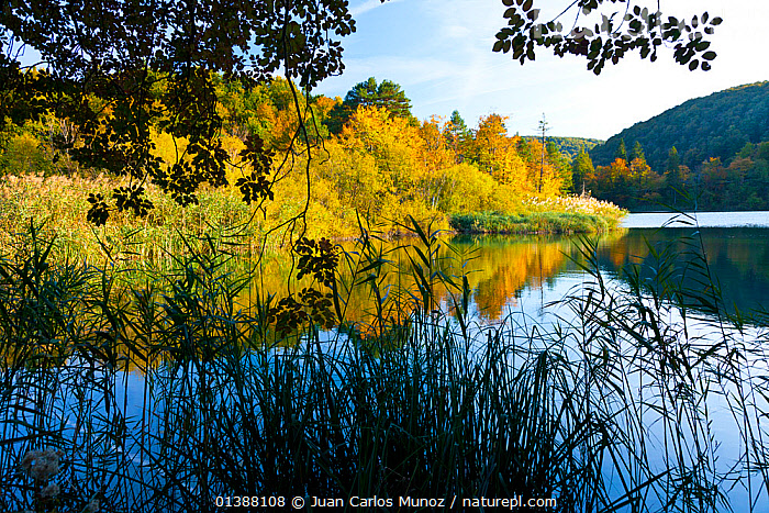 Lake with forest reflected in surface, Plitvice Lakes National Park, Lika, Croatia, Europe, October 2011  ,  AUTUMN,CROATIA,EASTERN EUROPE,EUROPE,FORESTS,GRASSES,LAKES,NP,REFLECTIONS,RESERVE,TREES,WATER,National Park,PLANTS  ,  Juan Carlos Munoz