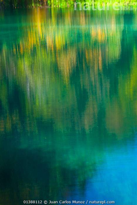 Colourful reflections in water, Plitvice Lakes National Park, Lika, Croatia, Europe, October 2011  ,  COLOURFUL,CROATIA,EASTERN EUROPE,EUROPE,LAKES,LANDSCAPES,NP,RESERVE,VERTICAL,WATER,National Park  ,  Juan Carlos Munoz