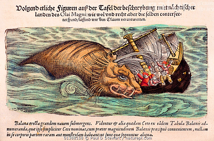 Woodcut illustration of whale attacking ship, with old colouring. From Gesner's 'Icones Animalium' published by Christof Froschover, Zurich, 1560.  ,  16TH CENTURY,AGES,ANIMALIUM,ANIMALS,ATTACK,BESTIARY,CETACEAN,COLOUR,CONRAD GESNER,CONRAD GESSNER,EXPLORATION,FOLKLORE,HISTORIAE,HISTORIC,HISTORICAL,HISTORY,ICONES,ILLUSTRATION,ILLUSTRATIONS,MAGNUS,MARINE,MEDIEVAL,MONSTER,MYTH,MYTHICAL,NATURAL,OLAUS,RENAISSANCE,SEA,SHIP,WHALE,WOODCUT  ,  Paul D Stewart