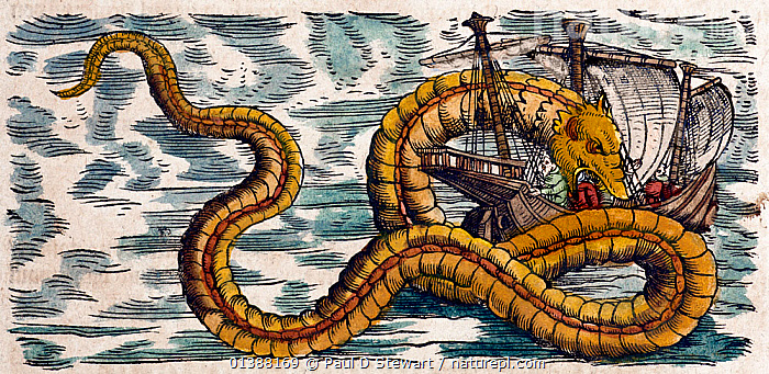 Illustration of Sea Serpents from Gessner's 'Historia Animalium', volume 4, 1558. Later hand colouring. Gessner's accounts included creatures which exist, and creatures which we now know do not. There were small sea snakes in the tropics, and eels in more temperate waters. There must have seemed every chance that such leviathan Sea Serpents roamed the deep. They hardly seemed less likely than the great whales. His accounts were based on first hand reports as well as the 'authorities' of earlier authors such as Aristotle and Pliny.  ,  16TH CENTURY,ATTACK,BOATS,COLOR,COLOUR,CONRAD GESNER,CONRAD GESSNER,DANGER,DRAGON,EXPLORATION,EXPLORER,HISTORIC,HISTORICAL,HISTORY,ILLUSTRATION,ILLUSTRATIONS,LOCH,MONSTER,MYTH,MYTHICAL,MYTHOLOGY ,NATURAL,NESS,RENAISSANCE,SAILORS,SEA,SERPENT,SHIP,SNAKE,SNAKES,TOPSELL,WOODCUT  ,  Paul D Stewart