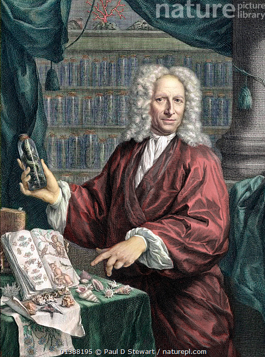 Portait of Albertus Seba, the Dutch pharmacist and collector of natural rarities, age 66 (b. May 12th 1665 - d. May 2nd 1736). Portrait with tinting, showing off rarities from his collection acquired through Holland's extensive maritime trade network. The portait forms the frontis of his famous 446 plate volume 'Thesaurus' published between 1734 and (posthoumously) 1765. The Thesaurus' complete title was 'Locupletissimi rerum naturalium thesauri accurata descriptio' (Accurate description of the very rich thesaurus of the principal and rarest natural objects). In recent years his book has been made popular by reprints of the lavish elephant folio plates, and original copies have sold for record amounts. The plates are at once exotic, beautiful and naive. They reveal his second collection, numbering in the thousands of specimens. Seba's first collection was sold to Peter the Great in 1716.  ,  18TH CENTURY,19TH CENTURY,ALBERTUS,COLLECTION,COLLECTOR,COLOURED,CURIOSITIES,CURIOSITY,DUTCH,ENGRAVING,EXOTIC,GREAT,HISTORIC,HISTORICAL,HISTORY,ILLUSTRATION,ILLUSTRATIONS,KUNSTKAMMER,MAN,MUSEUM,NATURAL,NATURALIST,PEOPLE,PETER,PHARMACIST,PORTRAIT,PORTRAITS,PRIVATE,RENAISSANCE,SCIENTISTS,SEBA,VERTICAL,ZOOLOGIST  ,  Paul D Stewart