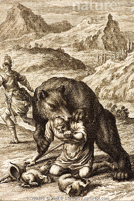 European Brown Bear (Ursos arctos arctos) kills hunter who has taken her cubs. 1731 Physica Sacra (Sacred Physics) by Johann Scheuchzer (1672-1733) bear attack, folio copper engraving drawn by a team of engravers under the direction of Johann Andreas Pfeffel (1674-1748)^^^. The picture comes from proverbs 17:12 'It is safer to meet a bear robbed of her cubs, than to confront a fool caught in his folly'. To the Israelites the Syrian brown bears rage at the loss of her cubs was the strongest type of brute ferocity. The goal of Scheuchzer's work was to use the best contemporary science to illuminate the biblical account of human history in a sequence of 745 plates.  ,  AGGRESSION,ANIMAL,ATTACK,BEAR,BEARS,BIBLE,BITE,CARNIVORES,HISTORICAL ILLUSTRATIONS,HUNTING,ILLUSTRATIONS,INSTINCT,JOHANN,MAMMALS,MATERNAL,PEOPLE,PHYSICA,PHYSICS,PROVERB,RENAISSANCE,SACRA,SACRED,SCHEUCHZER,URSIDAE,VERTEBRATES,VERTICAL  ,  Paul D Stewart