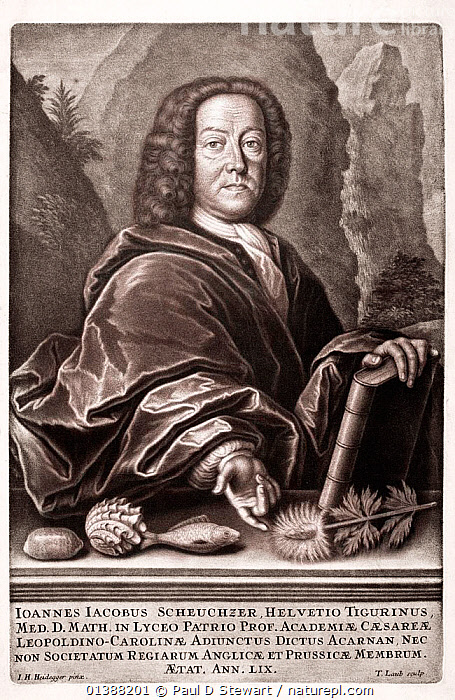 Johann Jakob Scheuchzer (born August 2nd 1672 - died June 23rd 1733). Swiss traveller naturalist and geologist. Contemporary Folio size Portrait copper engraving at 59 years old (1731) from Physica Sacra. His best known scientific works are his paleontological Lithographia Helvetica (1726) and his Physica Sacra, a massively scientifically illustrated Biblical History. In both books he states fossils as evidences of the Biblical flood. Notoriously he illustrated Homo Diluvii testis as a human victim of the flood. It was only identified correctly as a giant fossil salamander by Cuvier in 1811.  ,  17TH CENTURY,18TH CENTURY,19TH CENTURY,ARK,BIBLE,BIBLICAL,BOTANIST,CREATIONISM,CREATIONIST,CUVIER,DELUGE,DILUVIANISM,DILUVII,FOSSILS,HELVETICA,HISTORIC,HISTORICAL,HISTORY,HOMO,ILLUSTRATIONS,LITHOGRAPHIA,MAN,NATURALIST,NOAH'S,PALEONTOLOGIST,PALEONTOLOGY,PEOPLE,PHYSICA,PORTRAIT,RENAISSANCE,SACRA,SALAMANDER,SCHEUCHZER,SCIENCE,TESTIS,VERTICAL  ,  Paul D Stewart