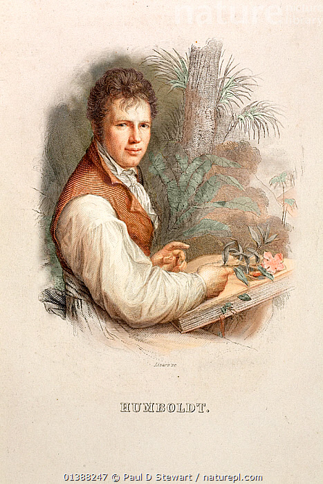 Portrait of Friedrich Alexander von Humboldt (14th September 1769 - 6th May 1859), Lizars' Steel engraving c 1830 with hand colouring after the 1806 painting by Friedrich Weitsch. A German explorer and naturalist who travelled in South America from 1799-1804. His work 'Travels in the Equinoctial Regions of the New World' had a profound influence on the young Darwin before his Beagle voyage. Humboldt's later works included his ambitious work 'Kosmos' which attempted a synthesis of geography and natural science on the grand scale. Numerous geographical features and species are named after this explorer, who gained considerable fame and respect during his long life.  ,  19TH CENTURY,AMERICA,AUTHOR,BIOGEOGRAPHY,CHARLES DARWIN,EXPLORATION,EXPLORER,GEOGRAPHER,GEOGRAPHY,GERMAN,HISTORIC,HISTORICAL,HISTORY,ILLUSTRATIONS,MAN,NATURALIST,PEOPLE,POPULAR,PORTRAITS,SCIENCE,SCIENTIST,SCIENTISTS,SOUTH,VERTICAL  ,  Paul D Stewart