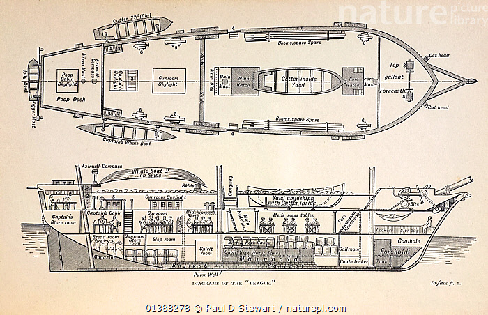 Plan illustration of 'H.M.S. Beagle Middle Section Fore and Aft 1832' from 'The Voyage of HMS Beagle' (cover title) by Charles Darwin. Illustrated edition of 1890.  ,  19TH CENTURY,BEAGLE,BOATS,CHARLES DARWIN,FITZROY,HISTORIC,HISTORICAL,HISTORY,ILLUSTRATIONS,ORIGIN,PLAN,SCHEMATIC,SHIPS,VOYAGE  ,  Paul D Stewart