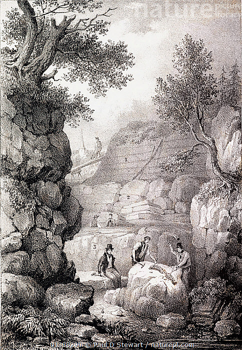 Illustration of 'Strata of Tilgate Forest in Surrey' showing Gideon Mantell (seated) while two workmen excavate a partly exposed fossil spine of Iguanodon. The strata are labelled as: 1 Loam, 2 Sand and soft Sandstone, 3 Calciferous sandstone (fossil bearing), 4 Blue Clay or Marl. Drawn by F. Pollard, lithographed by P. Gauci, printed by Graf & Soret. From 'The Geology of the South East of England' by Gideon Mantell, 1833, published by Longman, Rees, Orme and Brown of Paternoster Row. Gideon Mantell made some of the world's first dinosaur discoveries here, including Iguanodon (1822) and Hylaeosaurus (1833). Quarry men would often keep specimens they found in the course of their work for his later inspection. Many of Mantell's Tilgate specimens were vital in Richard Owen's recognition and naming of the group Dinosauria.  ,  19TH CENTURY,DINOSAUR,DINOSAURIA,FOSSILS,GEOLOGIST,GEOLOGY,GIDEON,HISTORIC,HISTORICAL,HISTORY,HYLAEOSAURUS,IGUANODON,ILLUSTRATIONS,MANTELL,OWEN,PALAEONTOLOGIST,PALAEONTOLOGY,RICHARD,SURREY,TILGATE,VERTICAL,WEALD  ,  Paul D Stewart