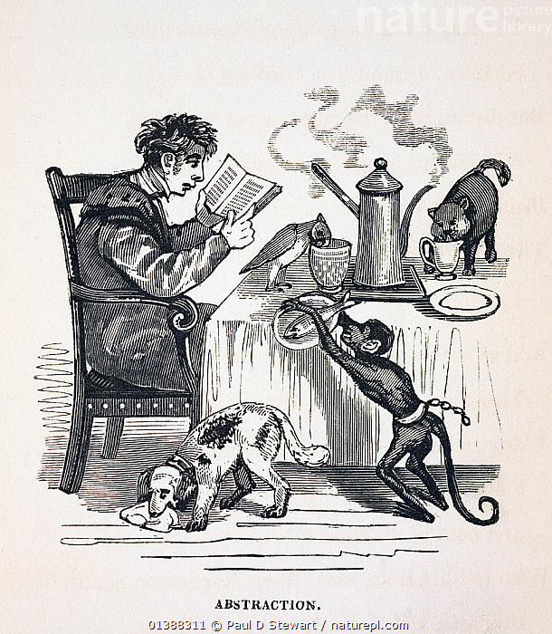 Illustration from 'The Anniversary of the Literary Fun 1836' by Thomas Hood, published by Baily and Co, Cornhill. The reputation of academics for absent mindedness, eccentricity, and absorbtion in their books goes back a long way. The theme of the home menagerie may have developed due to the exploits of eccentric naturalists such a geologist William Buckland who was famous for his Christ's College home menagerie (which at one point included a free range bear called Tiglath Pileser).  ,  19TH CENTURY,ABSORBED,ACADEMIC,BUCKLAND,CARACATURE,CARTOON,DON,ECCENTRIC,GEORGIAN,HISTORIC,HISTORICAL,HISTORY,ILLUSTRATIONS,MENAGERIE,PROFESSOR,VERTICAL,VICTORIAN  ,  Paul D Stewart