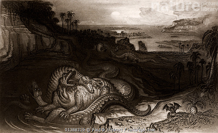 Illustration of 'The Country of the Iguanodon' by the apocalyptic artist John Martin, commissioned by Gideon Mantell as the frontis for his popular book 'The Wonders of Geology' (1838). Martin was visiting Mantell's Museum and was inspired by Mantells discoveries - particularly by the 'Mantell Piece' a slab of rock from Maidstone containing articulated bones of Iguanodon. This mezzotint (apparently from a painting by Martin presented to Mantell) was one of the first attempts at geological restoration of a pre-historic land environment, and shows an iguanodon being attacked by Megalosaurus. A gigantic crocodile is drawn to the fray, with the whole being watched by a pterodactyl. In the middle distance an Iguanodon and Hylaeosaurus prepare for another confrontation. The vegatation is that discovered by Mantell in the Tilgate forest beds.  ,  19TH CENTURY,DINOSAURS,EXTINCT,FIGHTING,HAWKINS,HISTORIC,HISTORICAL,HISTORY,HYLAEOSAURUS,IGUANODON,ILLUSTRATIONS,JURASSIC,MEGALOSAURS,MEZZOTINT,RESTORATION,RICHARD,TILGATE,WATERHOUSE,Aggression  ,  Paul D Stewart
