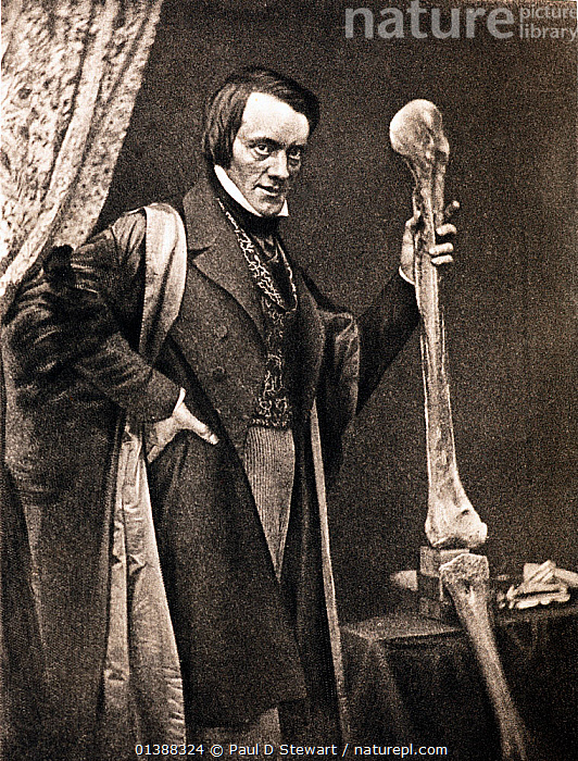 Portrait of Richard Owen and Moa leg (20, July 1804 - 18 December 1892) photo-engraved by Walker and Boutall around 1894 from an 1846 Daguerrotype. Owen was a comparative anatomist and palaeontologist - one of the most famous and politically influential biologists of the Victorian era. His achievements included coining the word Dinosauria (1842), and establishing the new British Museum of Natural History at South Kensington (1881). This photo commemorates his acheivement in theorising the existence of a giant flightless bird in New Zealand (the Moa) on the basis of just one small bone. He was soon proved right as this photo of him with a complete leg shows. Owen's reputation was damaged by his unwillingness to accept criticism, and a tendency to ruthlessly manoeuvre positions to take credit for discoveries. In fact the existence of the Moa had been supposed by others before him, but Owen failed to cite them.  ,  19TH CENTURY,ANATOMIST,BIOLOGIST,BIRD,BONES,CHARLES DARWIN,CUVIER,EXTINCT,FOSSILS,GIANT,HISTORIC,HISTORICAL,HISTORY,ILLUSTRATIONS,MOA,MUSEUM,NAUTILUS,PALAEONTOLOGIST,PALAEONTOLOGY,PORTRAITS,VERTICAL,VICTORIAN,ZOOLOGIST  ,  Paul D Stewart