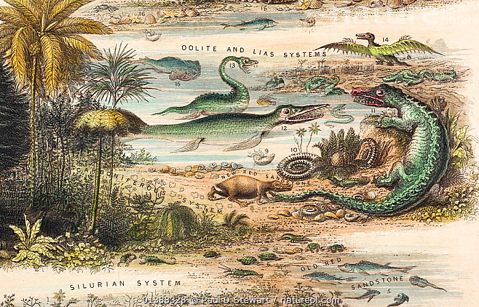 A rare British broadsheet illustration entitled 'The antediluvian world', with contemporary hand colouring, drawn and engraved by John Emslie and published by James Reynolds in 1849. It shows reconstructions of extinct creatures in their established epocs prior to the creation of man. The images from the lias apparently owe much to Thomas Hawkins and John Martin's dragon like reconstructions of the previous decade. The iguanodon (noted as 70 feet long) and pterodactyl are particularly dragon-like.  ,  19TH CENTURY,ANTEDILUVIAN,ANTIDILUVIAN,EVOLUTION,EXTINCT,FOSSILS,HISTORIC,HISTORICAL,HISTORY,ICHTHYOSAUR,IGUANODON,ILLUSTRATIONS,OOLITE,PLESIOSAUR,PRE DARWINIAN,PREHISTORIC,PTEROSAUR,RECONSTRUCTION,REYNOLDS  ,  Paul D Stewart