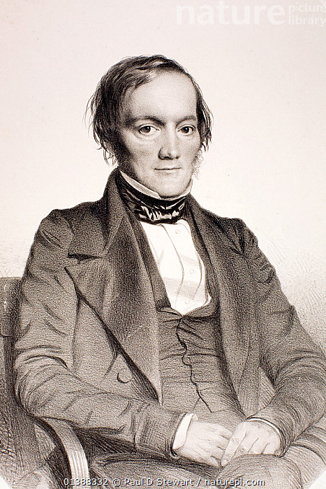 Portrait of Richard Owen (20 July 1804 - 18 December 1892). 1850 portrait by Thomas Herbert Maguire lithographed by M&H Hanhart. Part of the Portraits of the Honarary members of the Ipswich Museum collection published in 1852. Owen was a comparative anatomist and palaeontologist who became one of the most famous and politically influential victorian biologists. His acheivements included coining the word Dinosauria (1842 Vol. II Report on the British Reptiles), supervising the production of the first dinosaur reconstructions at the Sydenham Crystal Palace 1853, and establishing the new British Museum of Natural History at South Kensington in 1881. He worked hard and wrote prolifically, but his scientific legacy is limited. Owen's reputation was damaged by his unwillingness to admit mistakes or accept criticism, and a tendency to ruthlessly manoeuvre positions to take credit for discoveries.  ,  19TH CENTURY,ANATOMIST,ARCHETYPE,BIOLOGIST,BRITISH,DINOSAUR,DINOSAURIA,FOSSILS,HISTORIC,HISTORICAL,HISTORY,HUXLEY,ILLUSTRATIONS,MAN,MANTELL,PALAEONTOLOGIST,PEOPLE,PORTRAITS,SCIENTISTS,TAXONOMY,VERTICAL,VICTORIAN,ZOOLOGIST  ,  Paul D Stewart