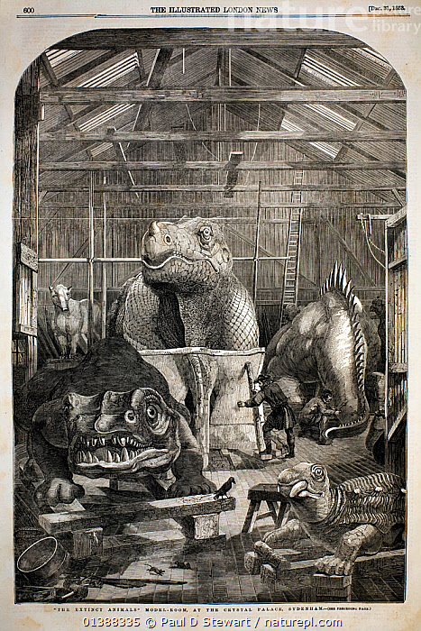 The Illustrated London News, December 31st, 1853, page 600. 'The Extinct Animals Model-Room, at the Crystal Palace, Sydenham' by P.H. Delamotte. Benjamin Waterhouse Hawkins made the first full size reconstructions of extinct animals to grace the geological gardens of the Crystal Palace. His work was based primarily on the advice of Professor Richard Owen, and informed by the work of Gideon Mantell, Francis Buckland, Baron Cuvier, Lyell and others. Hawkins worked on the project for three years at an estimated cost of �13,729 (half a million in todays terms). The iguanodon (central facing) still maintains the wrongly ascribed nose horn of Mantell (actually a thumb spike). It was, as Hawkins notes, 'the largest (model) of which there is any record of a casting being made'. The models ushered in the general public's fascination with dinosaurs and survive in Sydenham to the present day.  ,  19TH CENTURY,ANTEDILIVIAN,ANTEDILUVIAN,DINOSAUR,DINOSAURS,EXTINCT,HAWKINS,HISTORIC,HISTORICAL,HISTORY,IGUANODON,ILLUSTRATIONS,LABYRINTHODONT,MODEL,PREHISTORIC,RECONSTRUCTION,RESTORATION,STEGOCEPHALIA,SYDENHAM,VERTICAL  ,  Paul D Stewart
