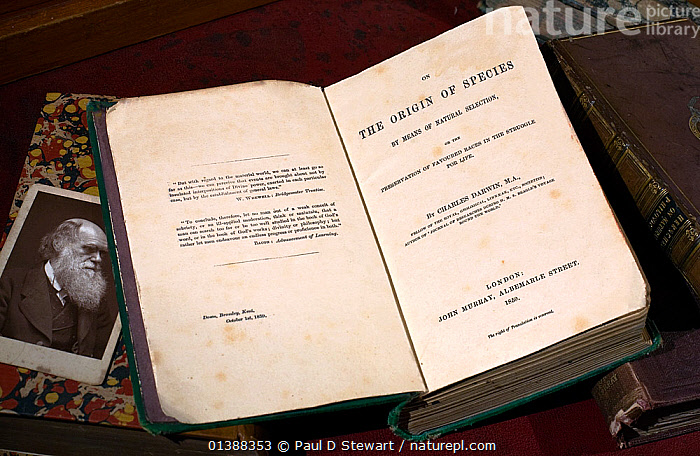 Copy of the first edition 'On the Origin of Species' by Charles Darwin (1859) together with a Cabinet photograph of Darwin and some other Darwin related books. 'The Origin' was first published on Thursday 24th Novemer 1859, priced at 15 shillings. A total of 1250 copies were printed, and all were taken up by booksellers on the first day.  ,  19TH CENTURY,1ST EDITION,BOOKS,CHARLES DARWIN,EVOLUTION,HISTORIC,HISTORICAL,HISTORY,ILLUSTRATIONS,NATURAL SELECTION,PORTRAITS,SCIENCE,SCIENTISTS  ,  Paul D Stewart
