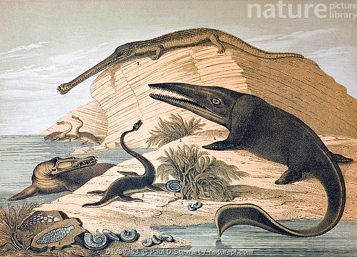 Lithograph with contemporary colouring, continental version of the wallchart produced by Benjamin Waterhouse Hawkins for the Department of Science and Art 1862. It is entitled 'Enaliosauria, or marine lizards that lived during the secondary epoch of the Earth's history'.  ,  1862,19th century,ammonite,Benjamin Waterhouse Hawkins,catalogue5,dinosaur,dinosaurs,Enaliosauria,Historic,HISTORICAL,history,Ichthyosaur,ILLUSTRATIONS,lithograph,lizard,MARINE,medium group of animals,mososaur,Nobody,plesiosaur,prehistoric,Reconstruction,REPTILES,teleosaurus,wallchart  ,  Paul D Stewart