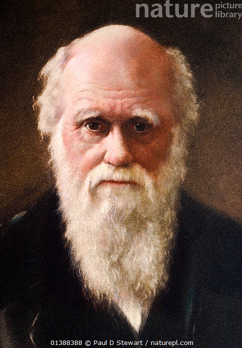 1881 portrait of Charles Robert Darwin (12 February 1809 - 19 April 1882) English Naturalist and author of the Origin of Species. 1922 Hand coloured portrait aquatint of Darwin by G. Sidney Hunt after the 1881 painting by John Collier. Collier's portrait is mentioned in his son Francis Darwin's 'Life and Letter of Charles Darwin' as follows 'Many of those who knew (Darwin's) face most intimately think that Mr. Collier's picture is the best of the portraits'. Darwin's theory of evolution by natural selection stands as one of the greatest ideas of science. No release available.  ,  19TH CENTURY,CHARLES DARWIN,EVOLUTION,HISTORIC,HISTORICAL,HISTORY,ILLUSTRATIONS,MAN,NATURAL SELECTION,PEOPLE,PORTRAITS,SCIENCE,SCIENTISTS,VERTICAL,Catalogue5  ,  Paul D Stewart