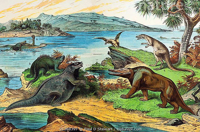19th century lithograph illustration of a Jurassic landscape including the dinosaurs: Megalosaurus (1), Iguanodon (2 with incorrect nose spike), Hylaeosaurus (3 with incorrect orientation of spines) Laelaps (4 now Dryptosaurus an early North American discovery). Mososaurs and Elasmosaurs in background. Vivid colour lithograph for 'Dr. Schubert's Naturgeschichte - Geologie, Mineralreich, Palaontologie'. Published in Stuttgart by J.F. Shreiber. The palaeontology section by Dr. Friedrich Rolle. German lithographers dominated colour lithography with their high volume productions such as this book for Children. The late Jurassic Solnhofen limestones used to lithograph these German prints sometimes contained finely preserved fossils of the very epoch they illustrated.  ,  19TH CENTURY,ARCHAEOPTERYX,BAVARIA,COLOUR,CRETACEOUS,DINOSAUR,DINOSAURS,HISTORIC,HISTORICAL,HISTORY,HYLAEOSAURUS,ICHTHYOSAUR,IGUANODON,ILLUSTRATIONS,JURASSIC,LANDSCAPES,LITHOGRAPH,LITHOGRAPHY,MEGALOSAURUS,PLESIOSAUR,PREHISTORIC,RECONSTRUCTION,SOLNHOFEN  ,  Paul D Stewart