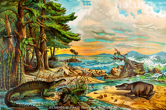 Landscape of the Triassic coastal environment with reconstructions of dinosaurs and marine reptiles, 'Dr. Schubert's Naturgeschichte - Geologie, Mineralreich, Palaontologie'. Published in Stuttgart 1888 by J.F. Shreiber. The palaeontology section by Dr. Friedrich Rolle. Foreground left is Belodon (a crocodile-like phytosaur), foreground right Mastodonsaurus (a temnospondyl amphibian). At the time this was engraved Mastodonsaurus was held responsible for the footprints found in Triassic sandstones and described as Chirotherium, but recent research indicates the trace fossil track belong to reptiles of the Pseudosuchia.  ,  19TH CENTURY,ANCIENT,CHIROTHERIUM,DINOSAUR,DINOSAURS,FOSSILS,HISTORIC,HISTORICAL,HISTORY,ILLUSTRATIONS,KENNGOTT,LANDSCAPES,LITHOGRAPH,LITHOGRAPHY,MARINE,MASTODONSAURUS,PHYTOSAUR,PREHISTORIC,RECONSTRUCTION,REPTILES,TEMNOSPONDYLE,TRIASSIC  ,  Paul D Stewart