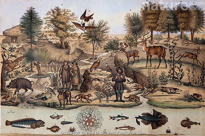 A northern temperate European landscape, reproduced in Lubach and Logeman's 'Panorama der Bewoonde Aarde' (Panorama of the Inhabited World) 1851. This hand tinted folding lithograph references a series of 18th century wall charts designed for schools teaching in Europe. Many of the animals are drawn from even earlier designs that can be dated back to Conrad Gesner's influence in the 16th century.  ,  16TH CENTURY,18TH CENTURY,19TH CENTURY,BESTIARY,BIOGEOGRAPHY,BIOME,BOREAL,CHART,CONRAD GESNER,CONRAD GESSNER,ECOLOGY,EDUCATION,EUROPEAN,HABITAT,HISTORIC,HISTORICAL,HISTORY,ILLUSTRATIONS,LINNAEUS,MIXED SPECIES,NORTHERN,PANORAMA,TEMPERATE  ,  Paul D Stewart
