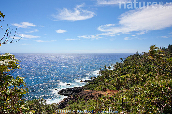 View over harbour of Pitcairn Island, Pitcairn Islands, South Pacific 2010  ,  COASTAL,COASTAL WATERS,COASTS,LANDSCAPES,MARINE,PACIFIC ISLANDS,SEA,SOUTH PACIFIC,TROPICAL,TROPICS  ,  Sue Flood
