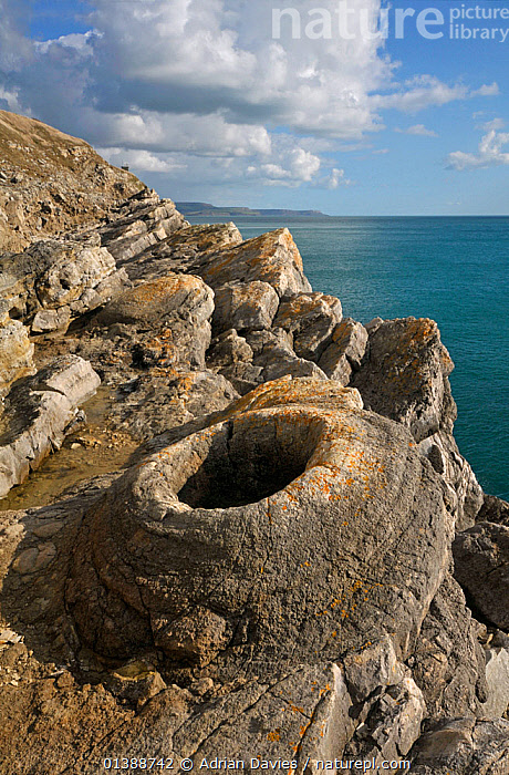 Fossil Forest at  Lulworth Cove, Isle of Purbeck, Dorset, England.  ,  CLOUDS,COASTS,ENGLAND,ENGLISH CHANNEL,EUROPE,FOSSILS,GEOLOGY,LANDSCAPES,OCEAN,UK,VERTICAL,WATER,Weather,United Kingdom,Catalogue5  ,  Adrian Davies