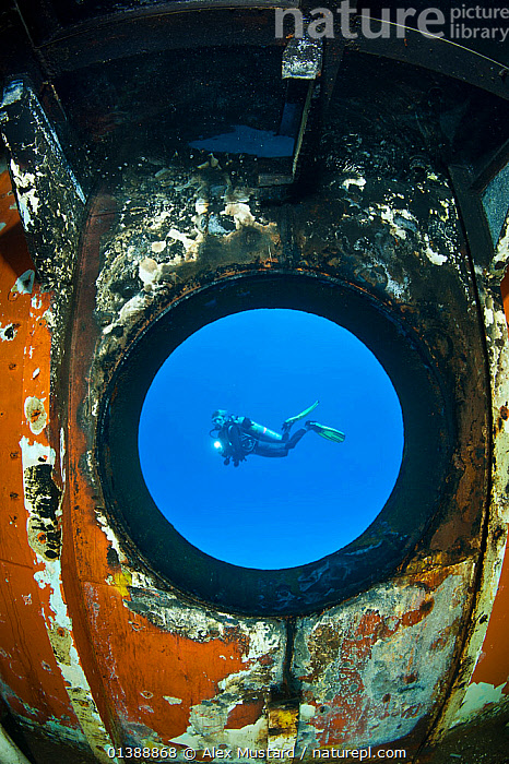 Diver seen through a porthole of the USS Kittiwake (US Military submarine rescue vessel)  Photograph was taken shortly after the wreck was deliberately sunk as an attraction for scuba divers, Caribbean Sea, Grand Cayman, the Cayman Islands. Model released.  ,  ARTY SHOTS,ATLANTIC OCEAN,CARIBBEAN,DIVING,ISLANDS,LEISURE,MARINE,PEOPLE,TOURISM,TROPICAL,UNDERWATER,VERTICAL,WATER PURSUITS,WEST INDIES  ,  Alex Mustard