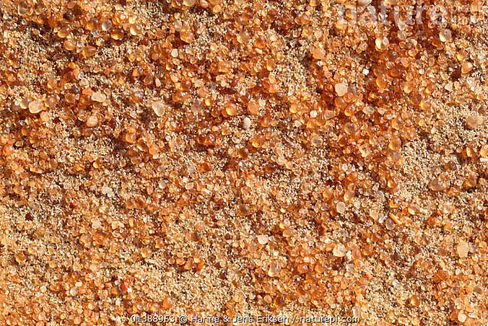 Sand corns, close-up, Empty Quarter, sand desert near Liwa, Abu Dhabi Emirate, UAE, December 2010., ABSTRACT,ARABIA,DESERTS,GRAIN,LANDSCAPES,MIDDLE EAST,MIDDLE EAST,ORANGE,PATTERNS,SAND,TEXTURE,UAE,YELLOW, Hanne & Jens Eriksen