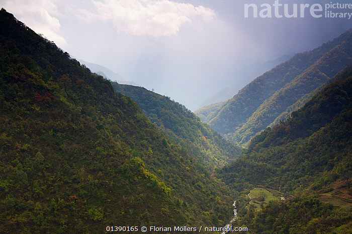 Fog over the steep slopes of a forested valley in Zhouzhi Nature Reserve, Qinling Mountains, Shaanxi, China 2006  ,  ASIA,AUTUMN,CHINA,FOG,FOGGY,FORESTS,HIGHLANDS,LANDSCAPES,MISTY,MOUNTAINS,RESERVE,SHENNONGJIA,VALLEYS,Catalogue5  ,  Florian Möllers
