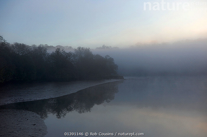 Early morning mist over the River Dart, Sharpham, Devon, UK, March 2012  ,  EUROPE,LANDSCAPES,MIST,REFLECTIONS,RIVERS,TREES,UK,WOODLANDS,PLANTS,United Kingdom  ,  Rob Cousins