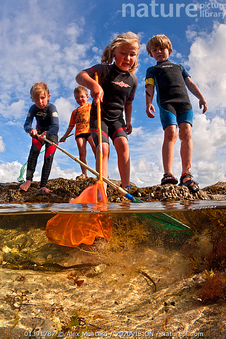 Children enjoying dipping in rockpools at low tide in Falmouth, Cornwall, England, UK, July, all model released  ,  2020VISION,ATLANTIC,CAUCASIAN,CHILDREN,COASTS,ENGLAND,ENGLISH CHANNEL,EUROPE,FOUR,LEISURE,MARINE,PEOPLE,ROCKPOOLS,SEAS,SPLIT LEVEL,TEMPERATE,TIDEPOOLS,UK,UNDERWATER,VERTICAL,United Kingdom,2020cc  ,  Alex Mustard / 2020VISION
