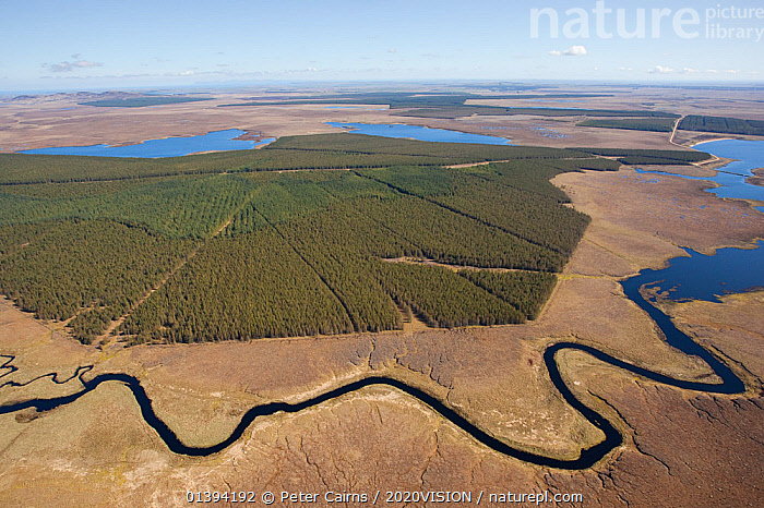 Aerial view across the Flow Country, with timber plantation, Forsinard, Caithness, Scotland, UK, May.  ,  2020VISION,AERIALS,BOGS,EUROPE,FORESTRY,LANDSCAPES,PEATLANDS,PLANTATIONS,SCOTLAND,UK,WETLANDS,United Kingdom,2020cc  ,  Peter Cairns / 2020VISION