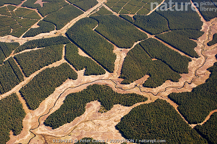 Aerial view of blocks of forestry plantation planted on blanket bog, Forsinard, Caithness, Scotland, UK, May.  ,  2020VISION,ABSTRACT,AERIALS,BOGS,EUROPE,FORESTRY,LANDSCAPES,PEATLANDS,PLANTATIONS,SCOTLAND,UK,WETLANDS,United Kingdom,2020cc  ,  Peter Cairns / 2020VISION