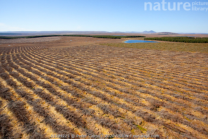 Aerial view of felled forestry plantation planted on blanket bog, Forsinard, Caithness, Scotland, UK, May.  ,  2020VISION,AERIALS,BOGS,EUROPE,FORESTRY,LANDSCAPES,PEATLANDS,PLANTATIONS,SCOTLAND,UK,WETLANDS,United Kingdom,2020cc  ,  Peter Cairns / 2020VISION