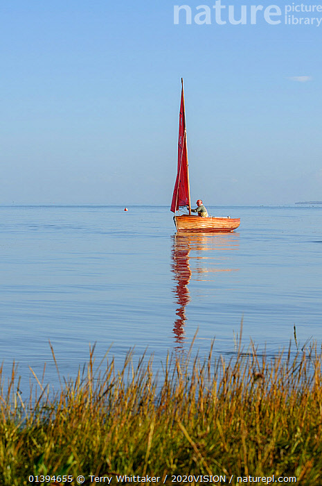 Small traditional sailing boat on the Thames Estuary, Two Tree Island, Essex, England, UK, October., 2020VISION,BOATS,COASTS,ENGLAND,EUROPE,GREATER THAMES FUTURESCAPES,LANDSCAPES,LEISURE,SAILING,SAILING BOATS,SALTMARSHES,SMALL,UK,VERTICAL,WOODEN,SIZE ,United Kingdom,2020cc, Terry Whittaker / 2020VISION