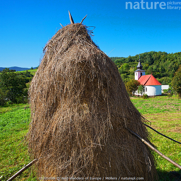 Traditional hay stack with the church of Nova Sedlica behind, Slovakia, September 2011, BUILDINGS,CHURCHES,EASTERN CARPATHIANS,EASTERN EUROPE,EUROPE,FARMING,FLORIAN MOLLERS,LANDSCAPES,REWILDING,SLOVAKIA,TRADITIONAL,WWE, Wild Wonders of Europe / Möllers